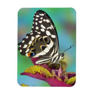 Sammamish, mariposa tropical 5 de Washington Iman Rectangular