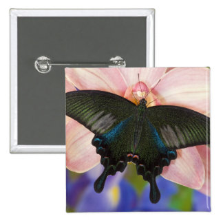 Sammamish, mariposa tropical 6 de Washington Pin Cuadrada 5 Cm