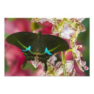 Sammamish mariposa tropical 7 de Washington Fotos
