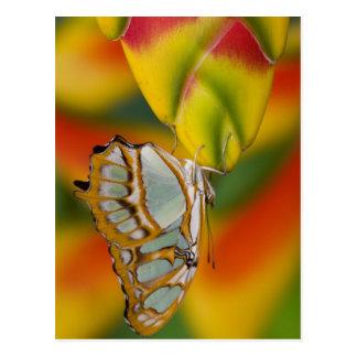 Sammamish, mariposa tropical 7 de Washington Postal