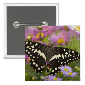 Sammamish, mariposa tropical 8 de Washington Pin Cuadrada 5 Cm