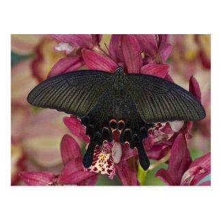 Sammamish, mariposa tropical 8 de Washington Postales