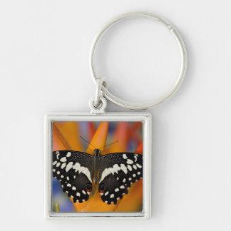 Sammamish mariposa tropical 9 de Washington Llavero Personalizado