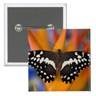 Sammamish, mariposa tropical 9 de Washington Pin Cuadrada 5 Cm