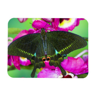 Sammamish, mariposa tropical de Washington Imán