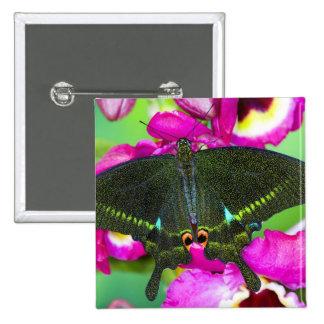 Sammamish, mariposa tropical de Washington Pin Cuadrada 5 Cm
