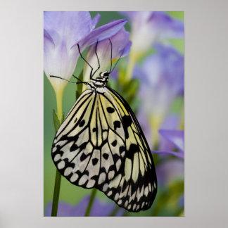 Sammamish, Washington. Mariposas tropicales 11 Posters