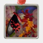 Sammamish, Washington. Mariposas tropicales 12 Adorno Navideño Cuadrado De Metal