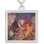 Sammamish, Washington. Mariposas tropicales 12 Colgante Cuadrado