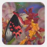 Sammamish, Washington. Mariposas tropicales 12 Pegatina Cuadrada