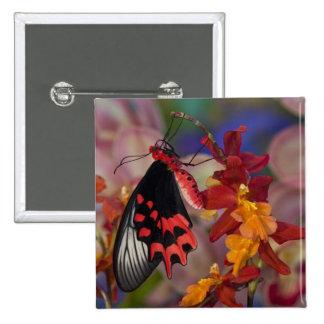 Sammamish, Washington. Mariposas tropicales 12 Pin