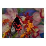 Sammamish, Washington. Mariposas tropicales 12 Tarjeta De Felicitación