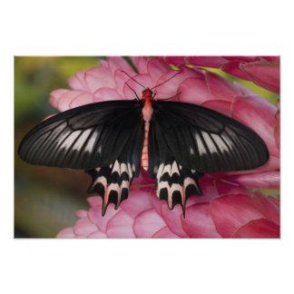 Sammamish, Washington. Mariposas tropicales 14 Cojinete