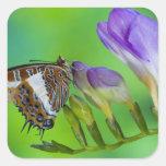 Sammamish, Washington. Mariposas tropicales 14 Calcomanía Cuadradase
