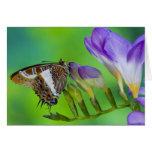 Sammamish, Washington. Mariposas tropicales 14 Tarjeta