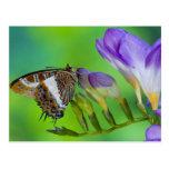 Sammamish, Washington. Mariposas tropicales 14 Postales