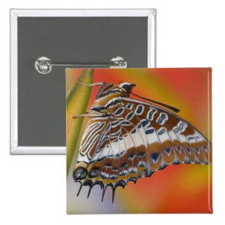 Sammamish, Washington. Mariposas tropicales 15 Pin Cuadrada 5 Cm