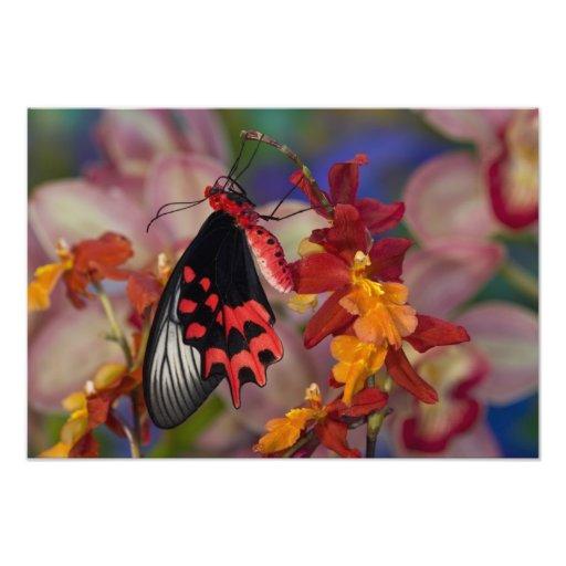 Sammamish, Washington. Mariposas tropicales 16 Impresiones Fotográficas