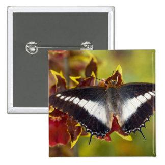 Sammamish, Washington. Mariposas tropicales 16 Pin Cuadrada 5 Cm