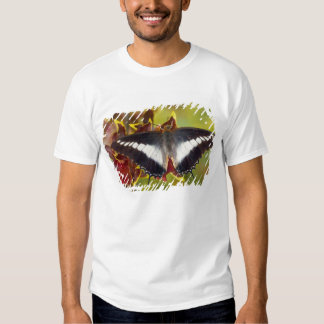 Sammamish, Washington. Mariposas tropicales 16 Playeras