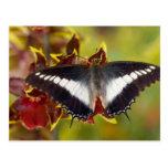 Sammamish, Washington. Mariposas tropicales 16 Postal