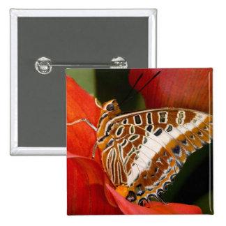 Sammamish, Washington. Mariposas tropicales 17 Pin Cuadrada 5 Cm