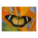 Sammamish, Washington. Mariposas tropicales 18 Tarjeta