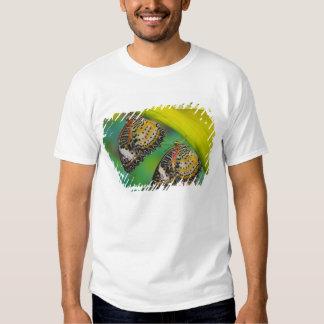 Sammamish, Washington. Mariposas tropicales 19 Camisas