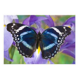 Sammamish, Washington. Mariposas tropicales 19 Fotografías
