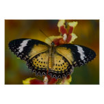 Sammamish, Washington. Mariposas tropicales 20 Impresiones
