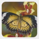 Sammamish, Washington. Mariposas tropicales 20 Pegatinas Cuadradas