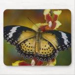 Sammamish, Washington. Mariposas tropicales 20 Alfombrillas De Ratón