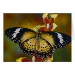 Sammamish, Washington. Mariposas tropicales 20 Tarjeton