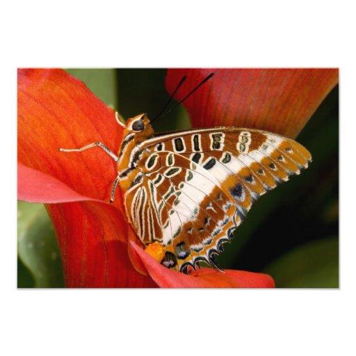 Sammamish, Washington. Mariposas tropicales 21 Fotografía