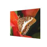 Sammamish, Washington. Mariposas tropicales 21 Lienzo Envuelto Para Galerías