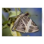 Sammamish, Washington. Mariposas tropicales 21 Tarjeta De Felicitación