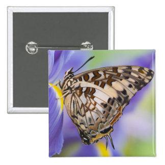Sammamish, Washington. Mariposas tropicales 22 Pin Cuadrada 5 Cm