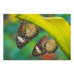Sammamish, Washington. Mariposas tropicales 23 Fotografía