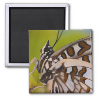 Sammamish, Washington. Mariposas tropicales 23 Imán De Frigorifico