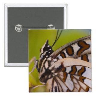 Sammamish, Washington. Mariposas tropicales 23 Pin Cuadrada 5 Cm