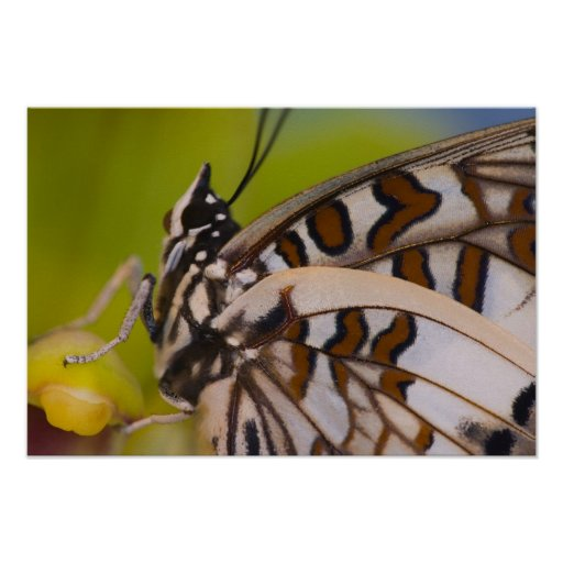 Sammamish, Washington. Mariposas tropicales 23 Póster