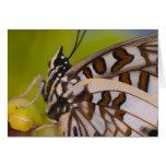 Sammamish, Washington. Mariposas tropicales 23 Tarjeta De Felicitación