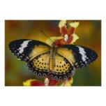 Sammamish, Washington. Mariposas tropicales 24 Fotografías