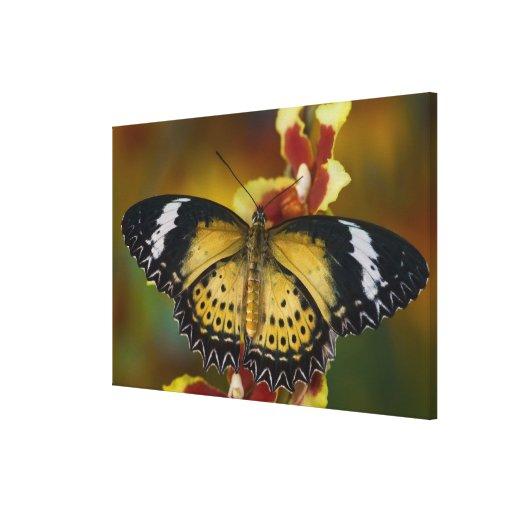 Sammamish, Washington. Mariposas tropicales 24 Lona Estirada Galerías
