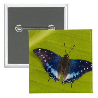 Sammamish, Washington. Mariposas tropicales 24 Pin Cuadrado