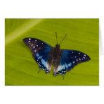 Sammamish, Washington. Mariposas tropicales 24 Tarjeta De Felicitación