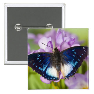 Sammamish, Washington. Mariposas tropicales 26 Pin Cuadrada 5 Cm