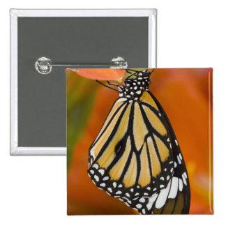 Sammamish, Washington. Mariposas tropicales 2 Pin Cuadrada 5 Cm