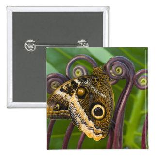 Sammamish, Washington. Mariposas tropicales 31 Pin Cuadrada 5 Cm