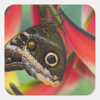Sammamish, Washington. Mariposas tropicales 32 Pegatina Cuadrada